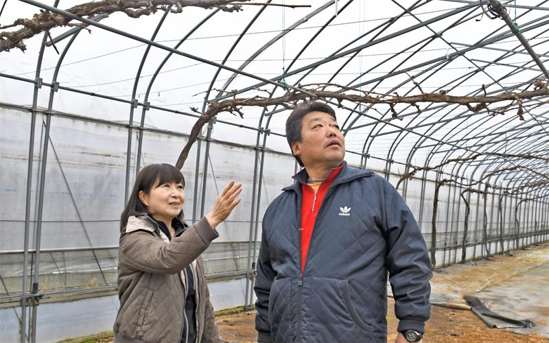 田川農産は、田川幹雄社長(右)夫人の田川由佳代取締役が主にブドウ栽培を担当している(1月27日)